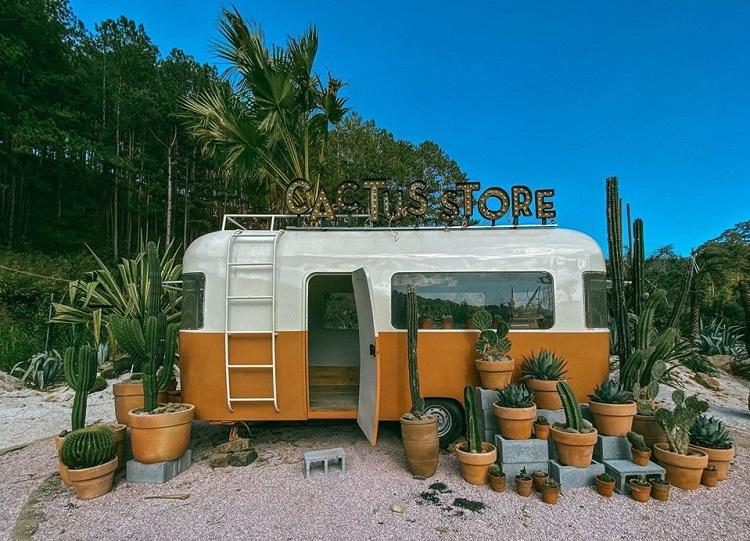 cactus-store-kombi-land